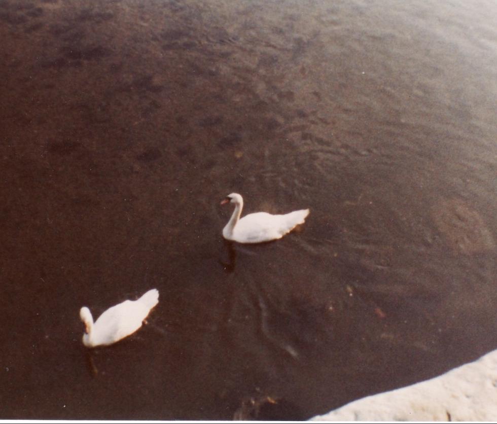 Caernarfon Harbour 1981
