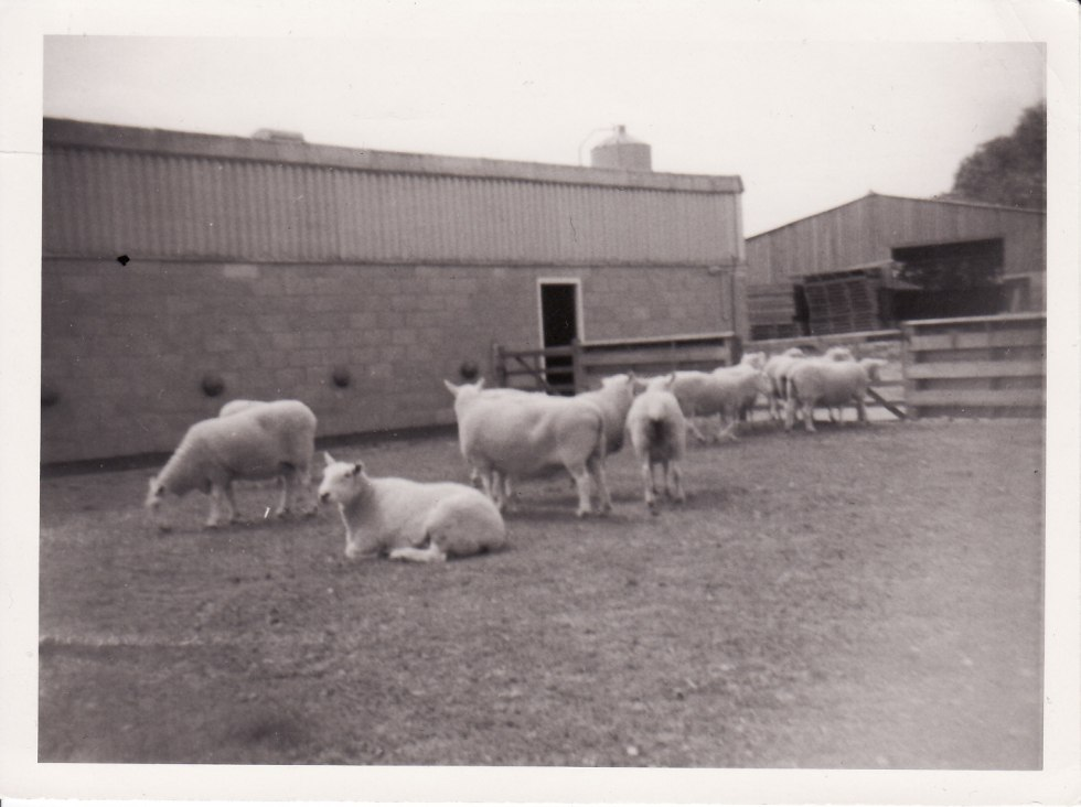 Hadlow College 1973